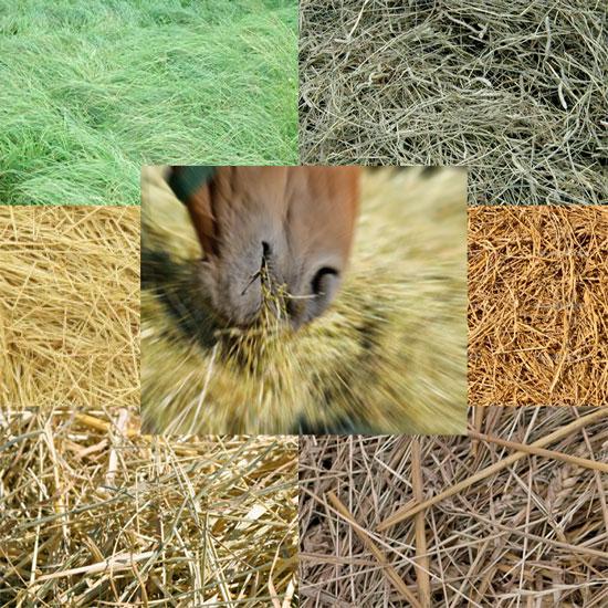 Заготовка грубых кормов