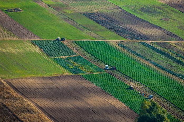 Самовольный захват земли: ответственность, рекомендации и особенности