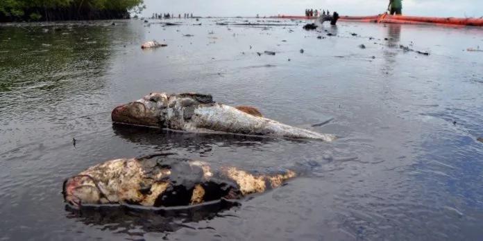 гибель морской фауны