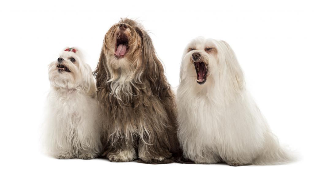 Собака лает у соседей: что делать по закону?